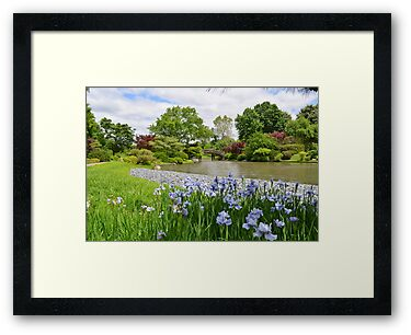 Light purple iris in Japanese Garden by Paula Betz