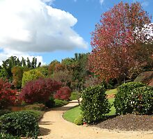 Red trees along the footpath, Japanese gardens, Toowoomba by Marilyn Baldey