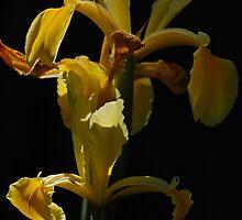 Spotlight on Yellow by photojeanic
