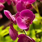 Purple pink orchids by papillonphoto