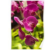 Purple pink orchids Poster