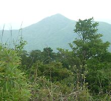 mountain towering over lush green jungle by Joseph Green