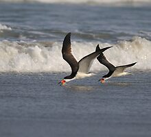 Black Skimmers Skimming by Tom Dunkerton