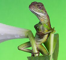 The Lounge Lizard by AngiNelson