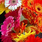 Gerberas gerberas shining bright by Julieholl