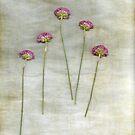 Five by Anne Staub