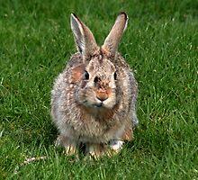 Run Rabbit Run !! by AnnDixon