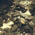 Anna Ruby Creek - Georgia, USA by Glenn Cecero