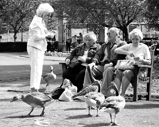 Fecking birds! by Neil Clarke