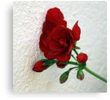 Wallflower / Muurblommetjie Canvas Print