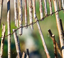 Willow Fence by Orla Cahill Photography