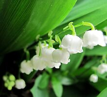 Lily of the valley by Abigail Shirley