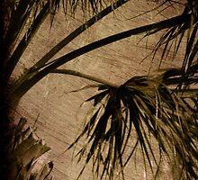 Vintage Palm by Susanne Van Hulst