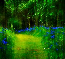 Down in Bluebell Wood by Tarrby