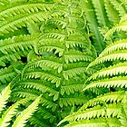 Ferns - Dunrobin Ontario by Debbie Pinard