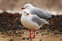 Seagulls by Maureen Clark