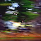 Geese in Motion by SPPhotography