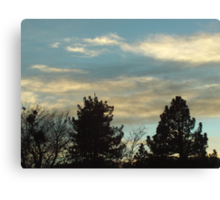 Clouds And The Coulter Pines Canvas Print