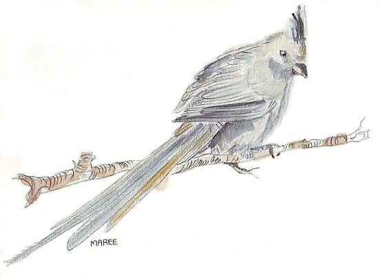 Speckled Mousebird by Maree  Clarkson