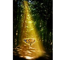 Butterfly in the Light Beam Photographic Print