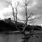 Tree on the River Wharfe by k8em