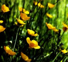 Brushed Buttercups by Linda  Makiej