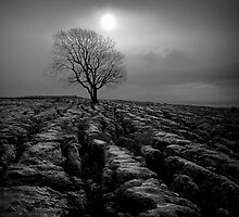 Malham Tree 01 - Yorkshire Dales, UK by Simon Lupton