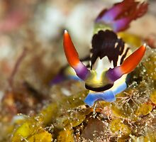 Colourful critter by Fiona Ayerst
