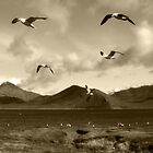 The Great Gull Escape by Corri Gryting Gutzman