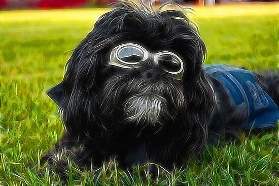 Cool Murphy with his goggles by Betterphotoart