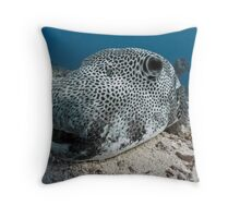 Up close & personal - a giant pufferfish Throw Pillow