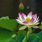 Lotus Flowers by artstoreroom