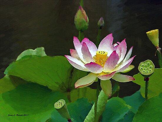 Lotus Flowers by artstoreroom