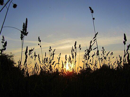 Sunset Thru the Hayfield... by Debbie Robbins
