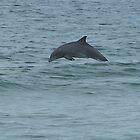 dolphin by tamarama