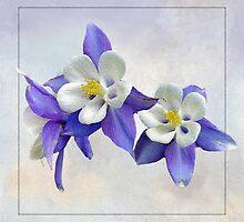 Columbine Blue by Brenda Boisvert
