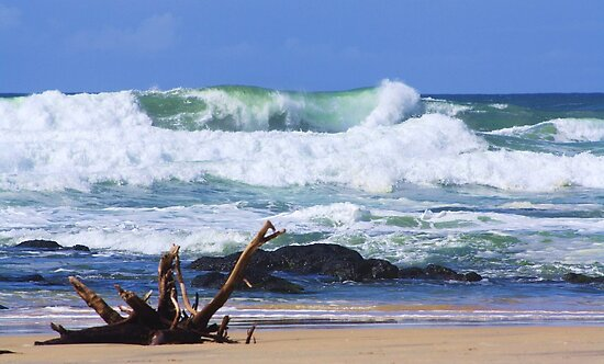 wild surf ... by gail woodbury