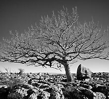 Newbiggin Crags 10 - Lone Tree & Limestone Pavement, Cumbria by Simon Lupton