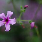 Purple Flower - NYBG Spanish Paradise by caitsings