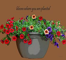Bloom Where You Are Planted by Diane E. Berry