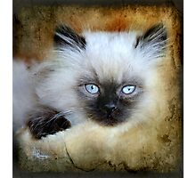 Little Blue Eyes Photographic Print