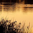 """On Golden Pond"" by Heather Thorning"