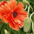 Flowers in color of Orange by David  Hughes