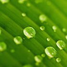 green lines and drops by lensbaby