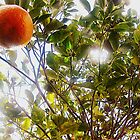 Orange Tree by SarahMistake