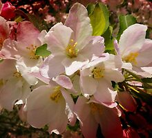 Spring's Beauty by Vickie Emms