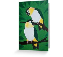 Black Headed Caiques Greeting Card