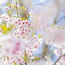 Glory of Spring by Sarah-fiona Helme