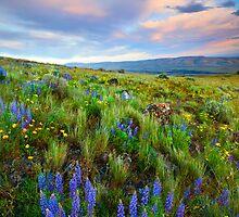 High Desert Spring by DawsonImages