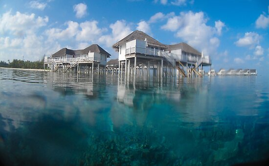 Half in, half out - Maldives reef houses by shellfish
